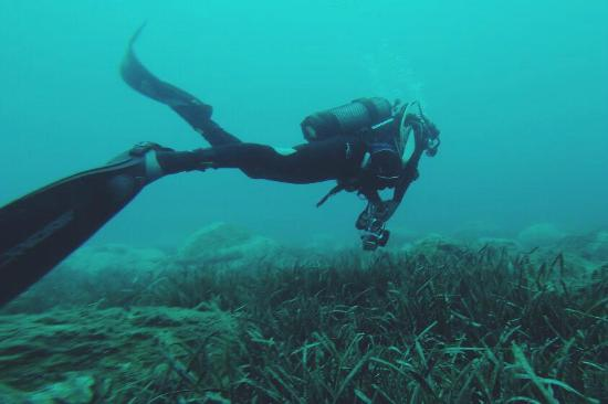 piscis-diving